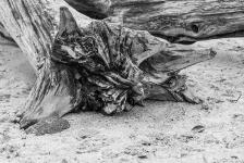 schlafende Bäume